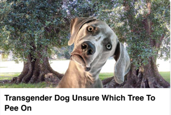 transgender dog